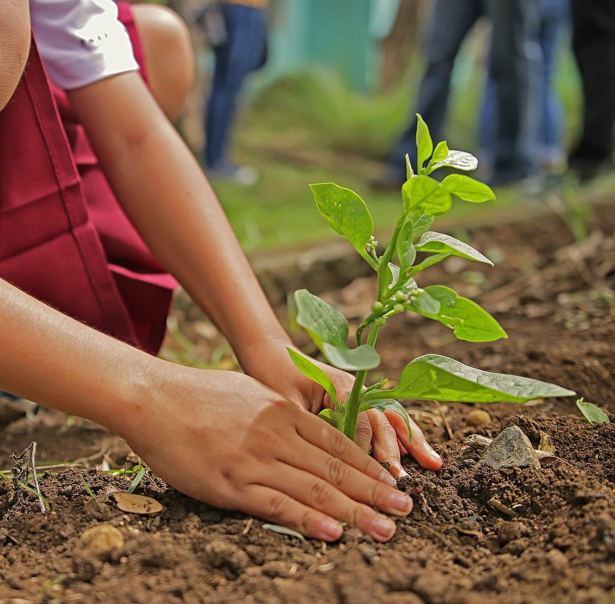 Planter des arbres depuis son ordinateur et gratuitement avec Ecosia - manitra.net